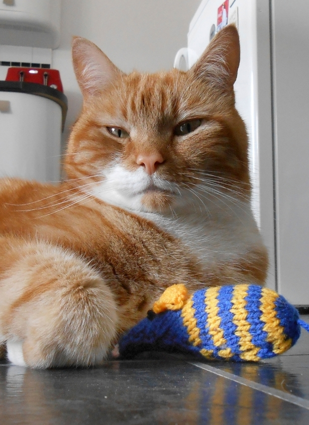 Cats Protection League launches annual knitting bee