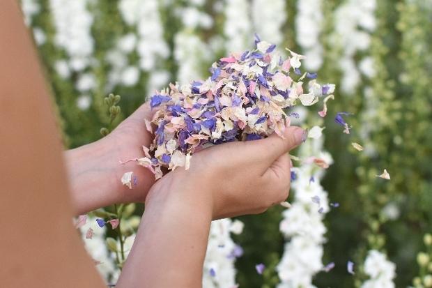 Shropshire Petals confetti