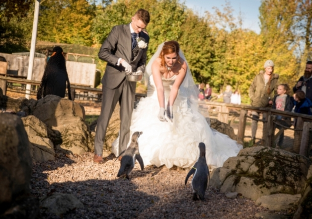Plan ahead with Twycross Zoo wedding showcase