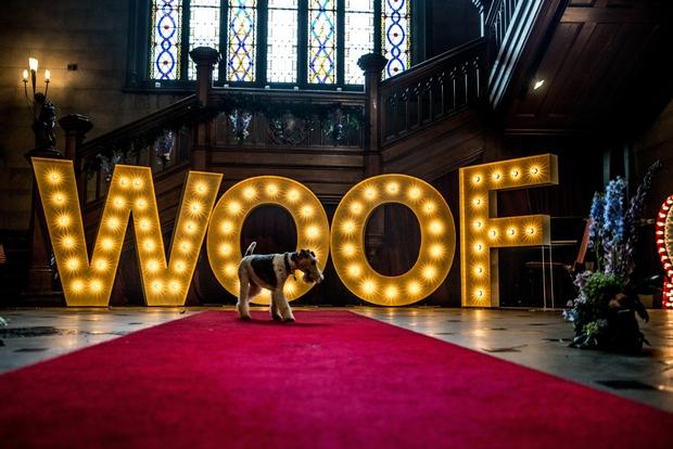 Canine Wedding at Northumberland's Matfen Hall